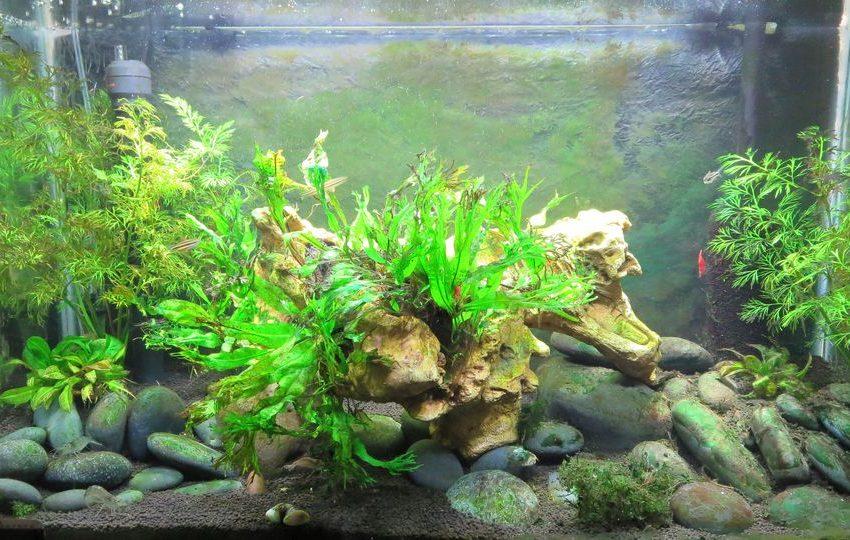 20 List of Effective Chemicals to Kill Algae in Aquarium